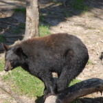 Oswald's Bear Ranch – Newberry