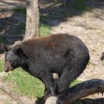 Oswald's Bear Ranch – Newberry
