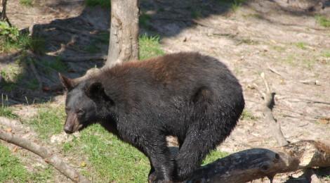 Oswald's Bear Ranch - Newberry