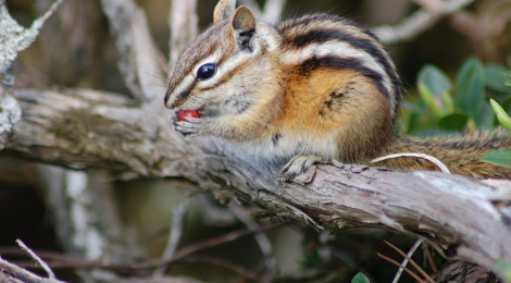 10 Great Places To View Wildlife in Michigan's Upper Peninsula