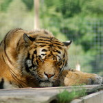 DeYoung Family Zoo – See Lions, Tigers and Bears in the Upper Peninsula!