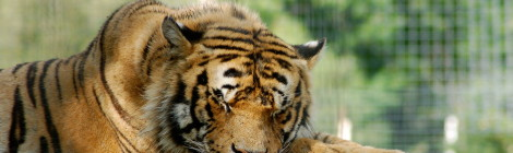 DeYoung Family Zoo - See Lions, Tigers and Bears in the Upper Peninsula!