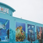 Michigan's Largest Aquarium Offers Cheaper Visit With June Buy One Get One Free Deal