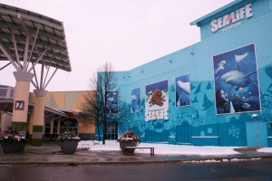 Sea Life Aquarium in Great Lakes Crossing Mall, Entrance 7 by Rainforest Cafe