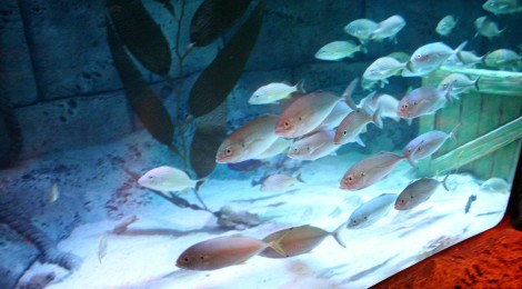 Sea Life of Michigan: 7 Nearby Destinations for Kids and Families