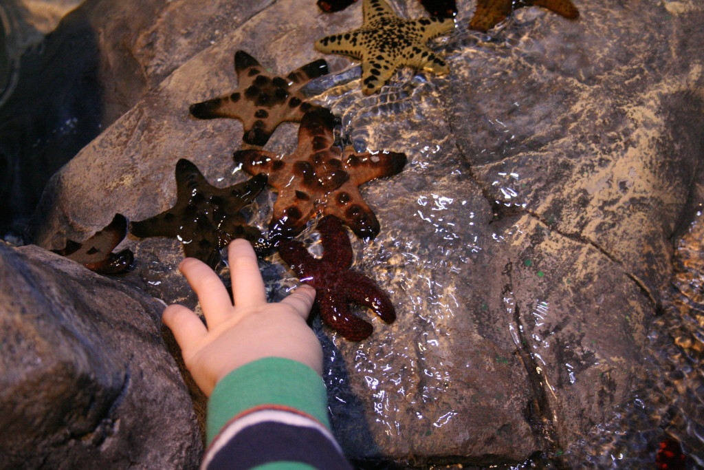 Touch Pool Features Sea Stars