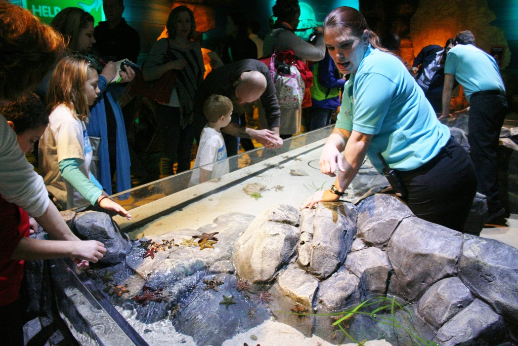 Children Will Love Touching the Sea Life in the Interactive Area