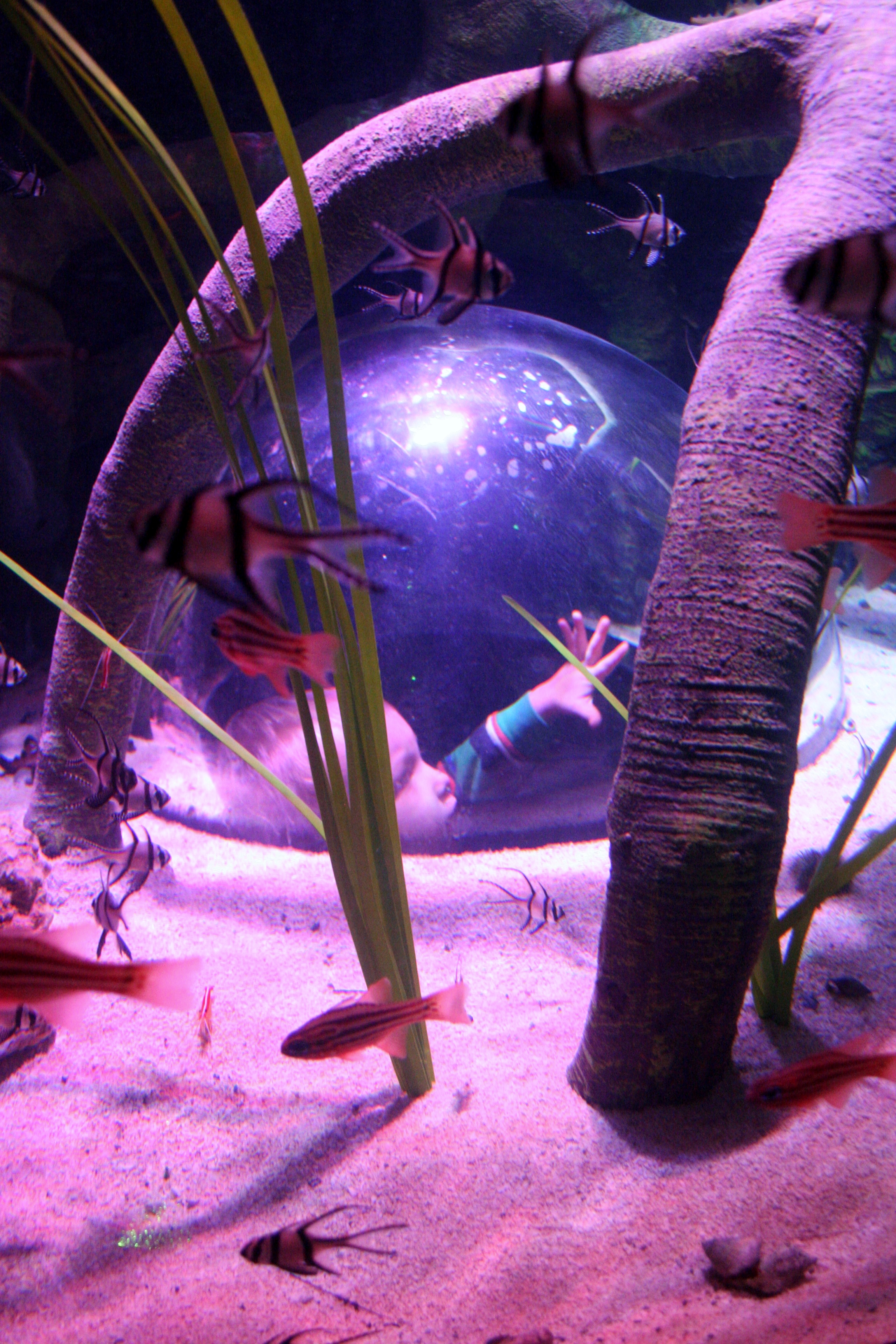 Visit sea life michigan aquarium through 25 pictures for Pop up aquarium