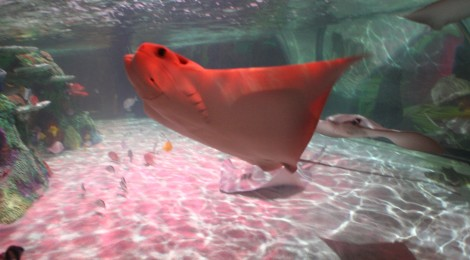 Visit Sea Life Michigan Aquarium Through 25 Pictures