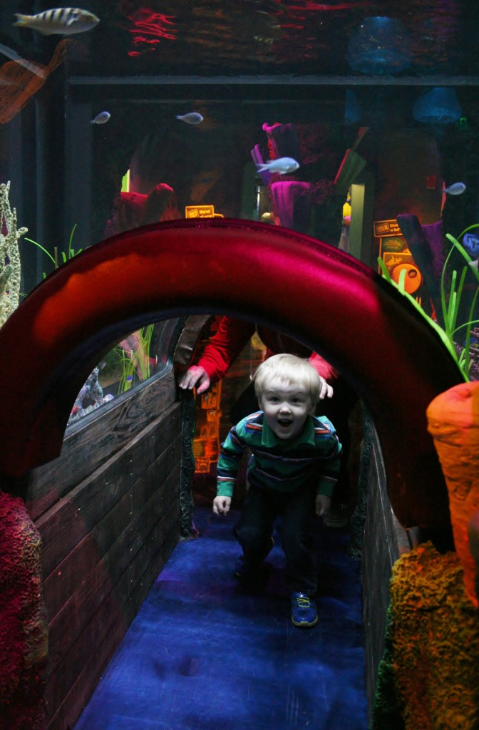 Children Will Love Viewing Tunnels Like this One