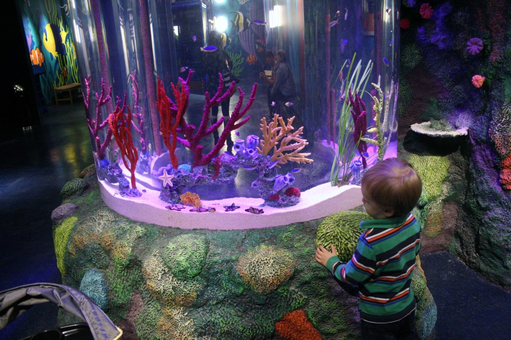 Children Can Get Up Close With Sea Life