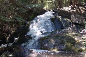 Michigan Wildlife Marquette Alder Falls