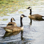 Michigan's Seney National Wildlife Refuge: Help It Get Named Best NWR in the U.S.