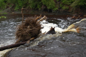 Manido Falls Tree Down Porcupine Mountains
