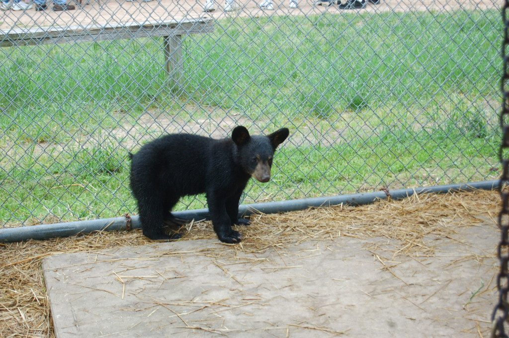 Oswald's Bear Ranch Baby