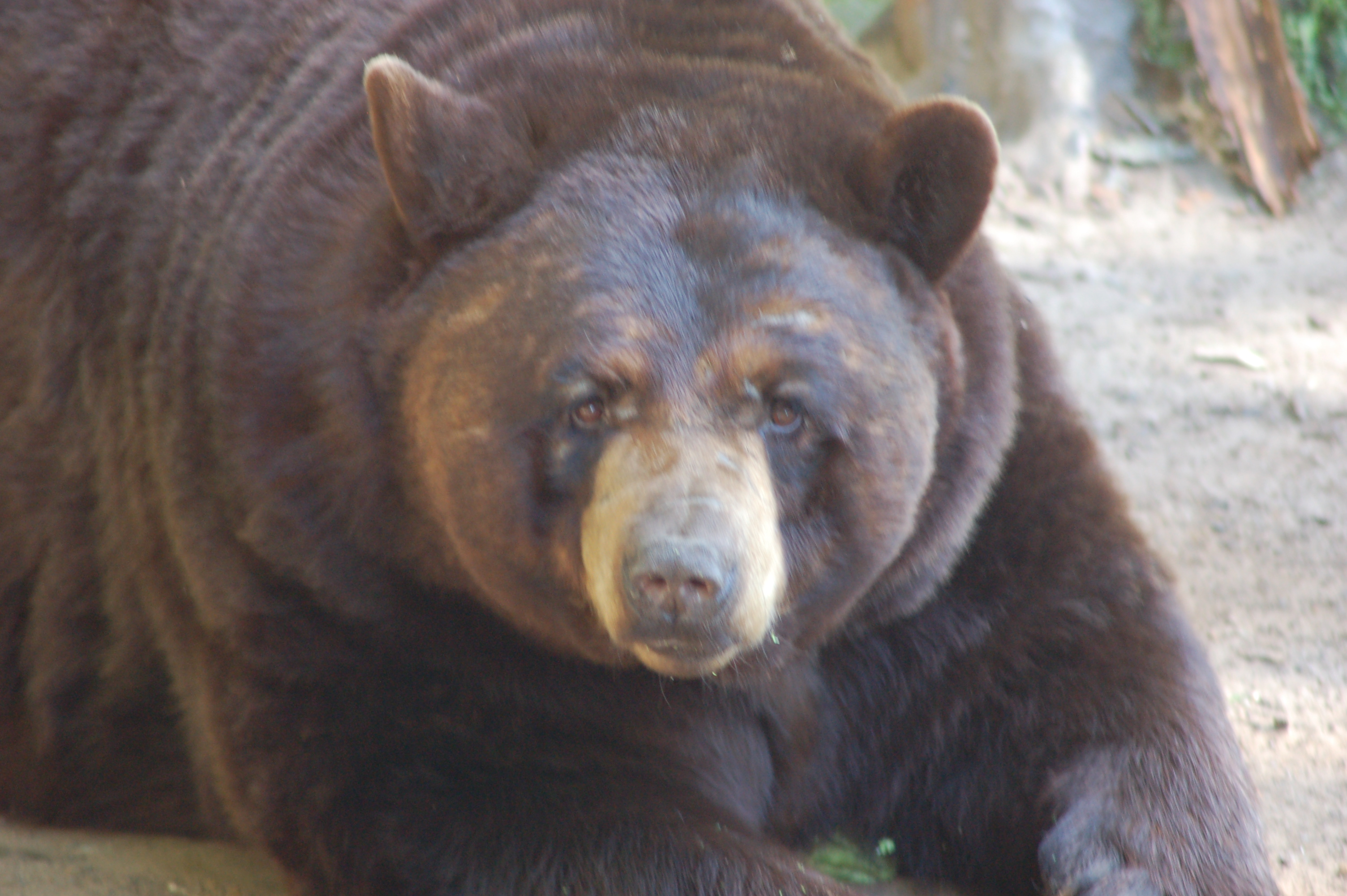 5 Family Friendly Animal Attractions In Michigan S Upper Peninsula Travel The Mitten