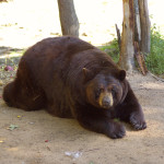 Photo Gallery Friday: Oswald's Bear Ranch