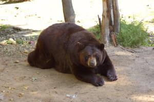 Oswald's Bear Ranch Travel Mitten