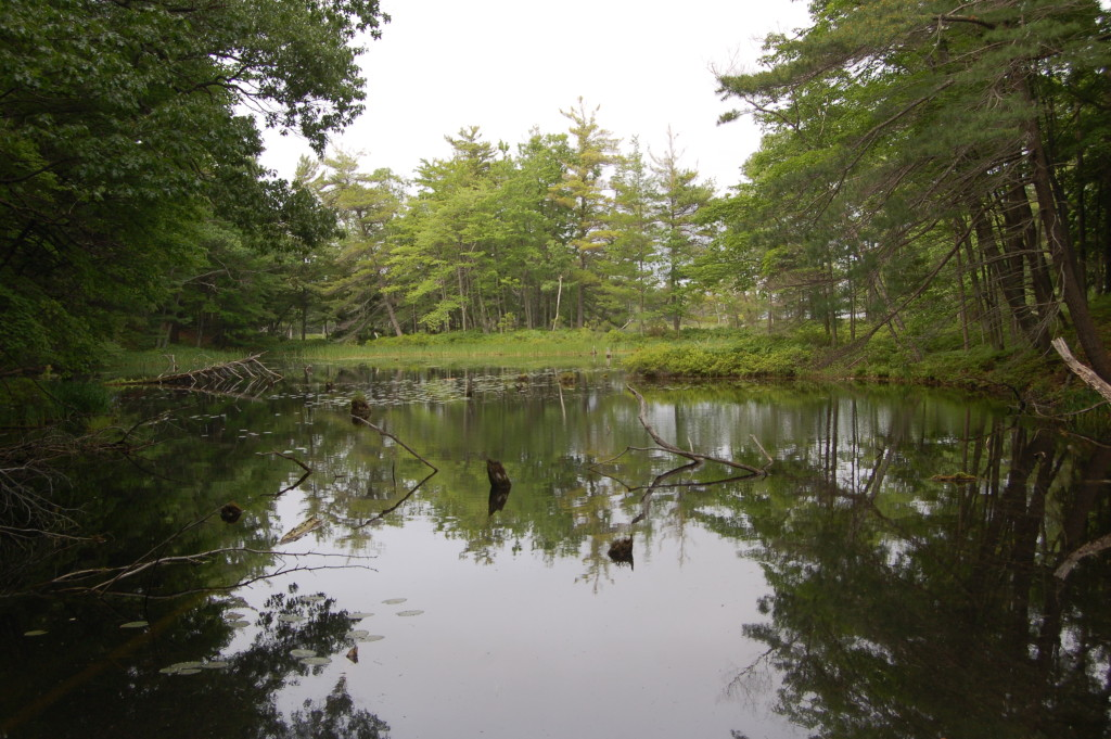 Ludington State Park Hike Pond