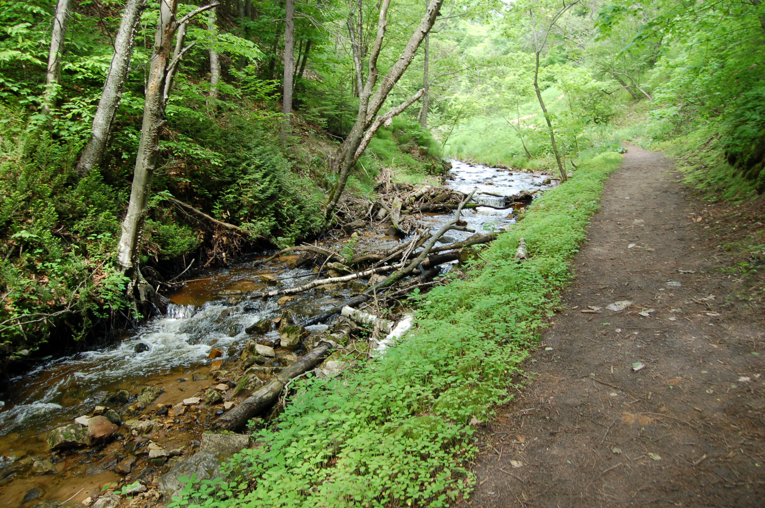 Cut River Below Bridge