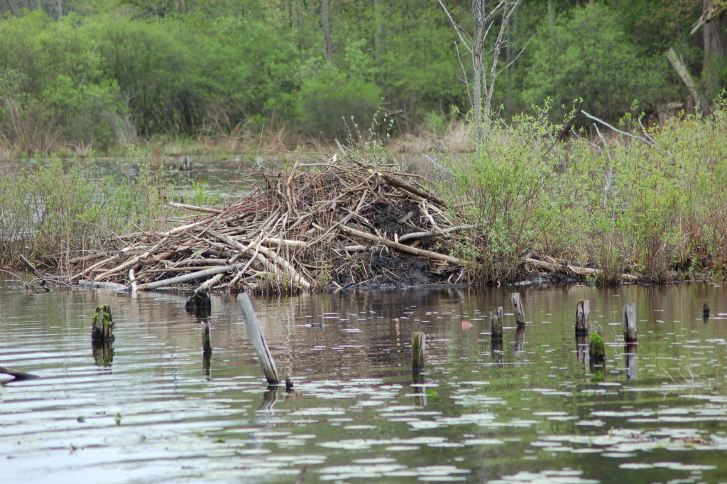 Beaver Dam Pickerel Lake Nature Preserve