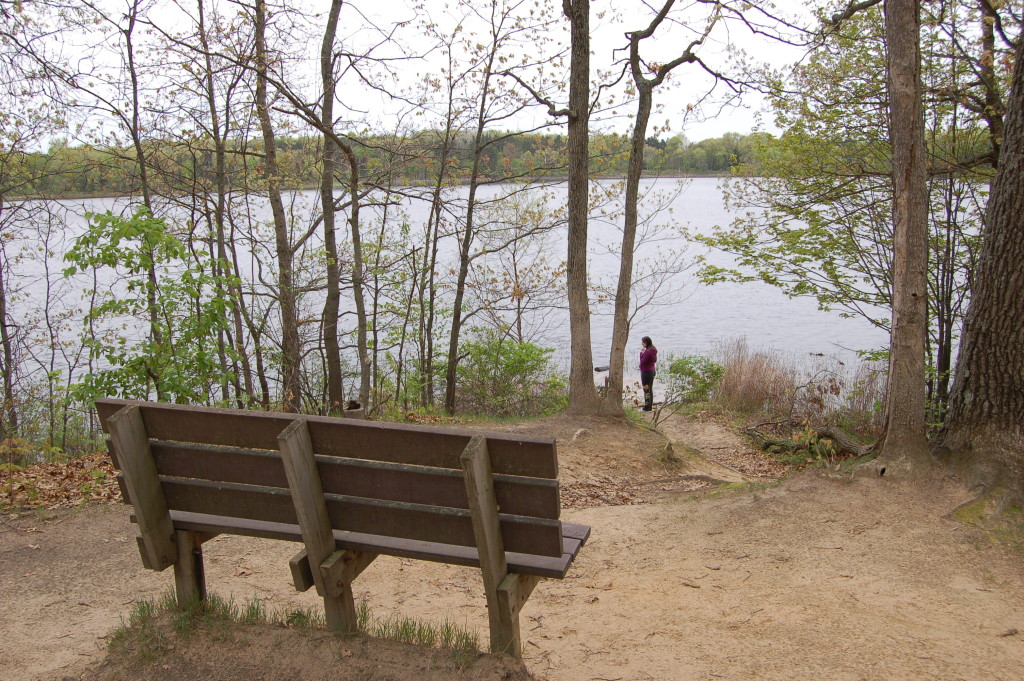 Bench Pickerel Lake Fred Meijer