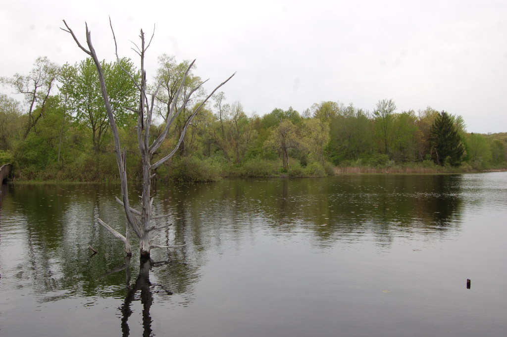 Fred Meijer Nature Preserve Grand Rapids