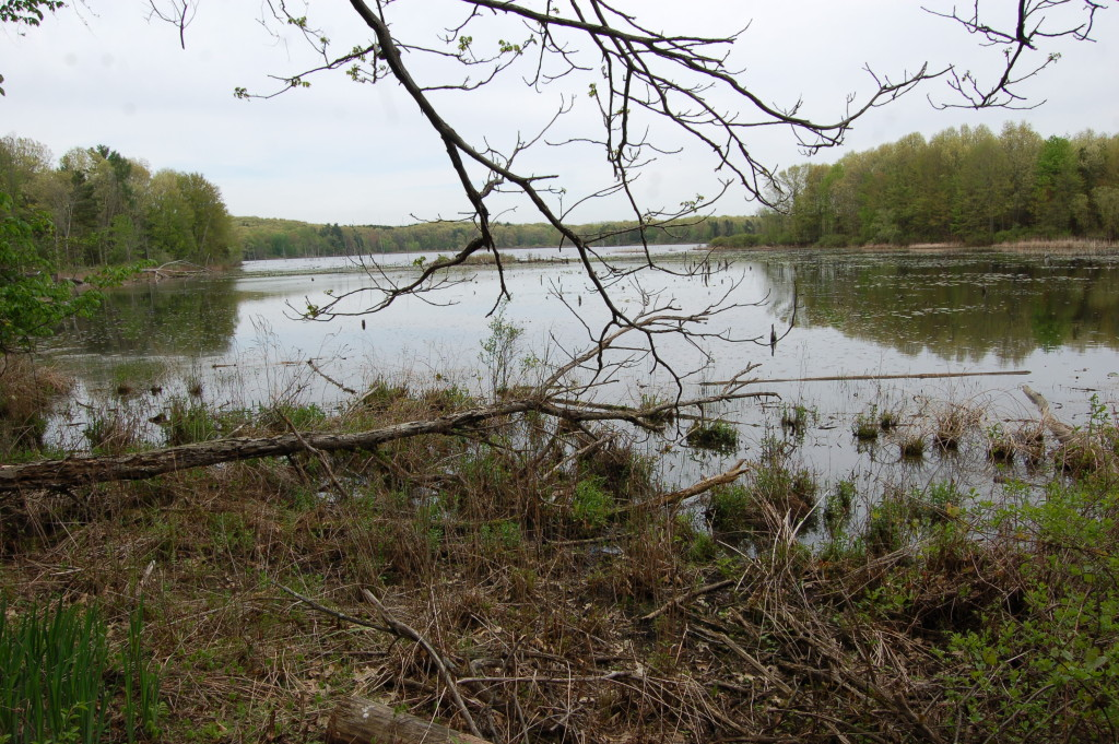Swamp Pickerel Lake