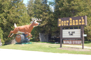 Deer Ranch St. Ignace Michigan