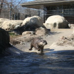 Photo Gallery Friday: Potter Park Zoo in Lansing