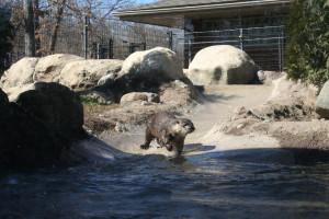Potter Park Zoo Otter Lansing