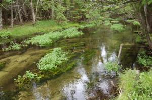 Horton Creek Ernest Heminway Michigan Fishing