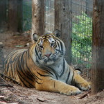 GarLyn Zoo: See Tigers, Wolves, Bears and More in Michigan's Upper Peninsula