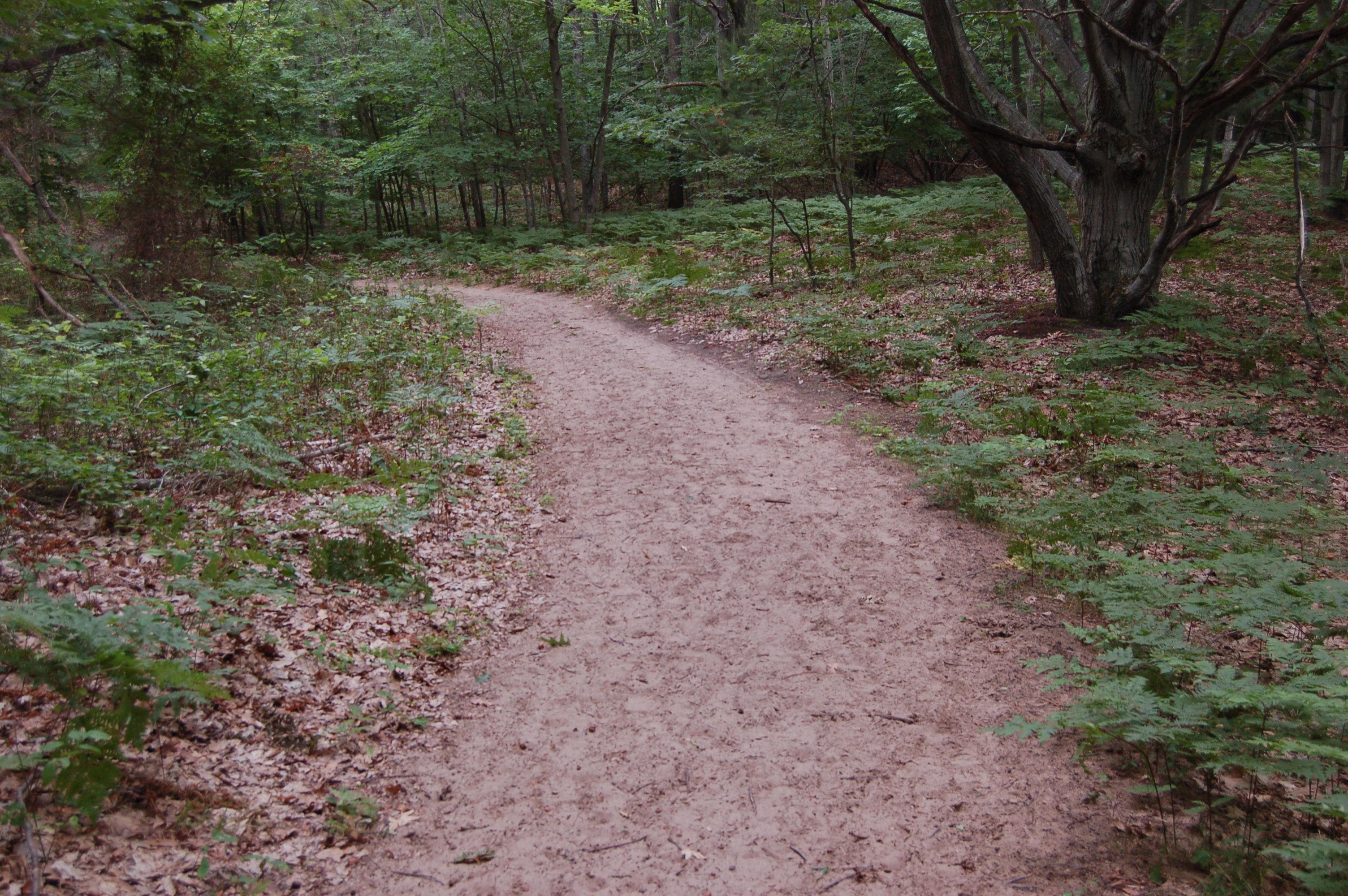 Forest Trail North Ottawa Dunes