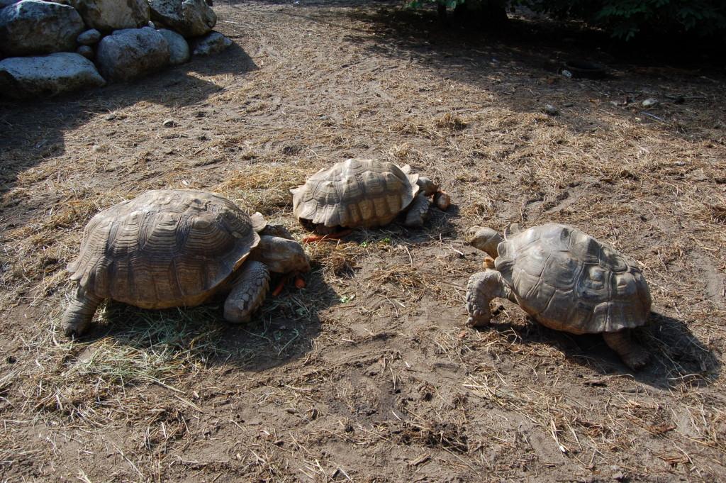 GarLyn Zoo 3 Tortoises