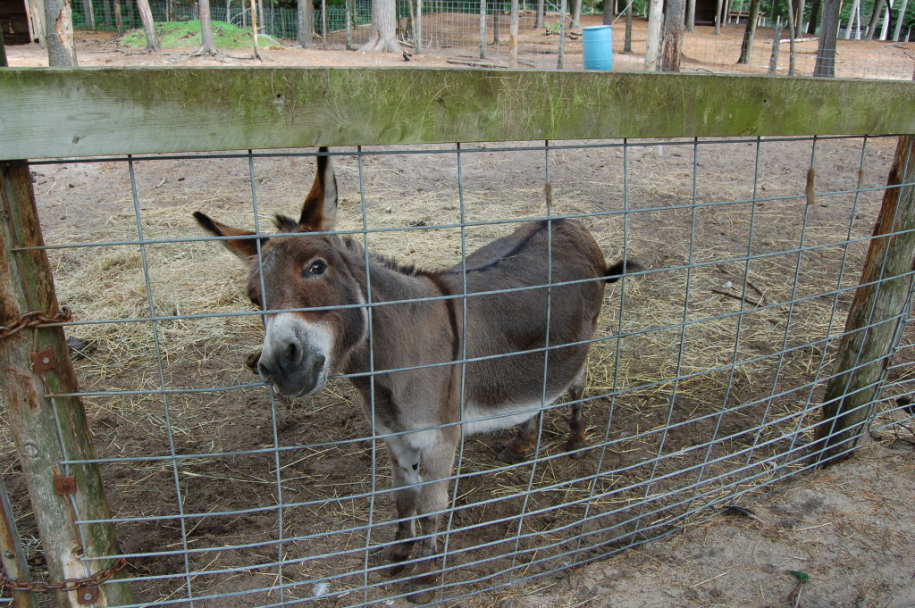 GarLyn Zoo Donkey