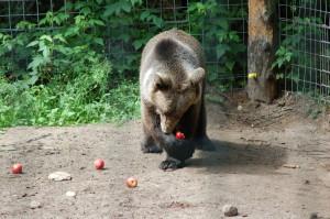 GarLyn Zoo Millie Brown Bear