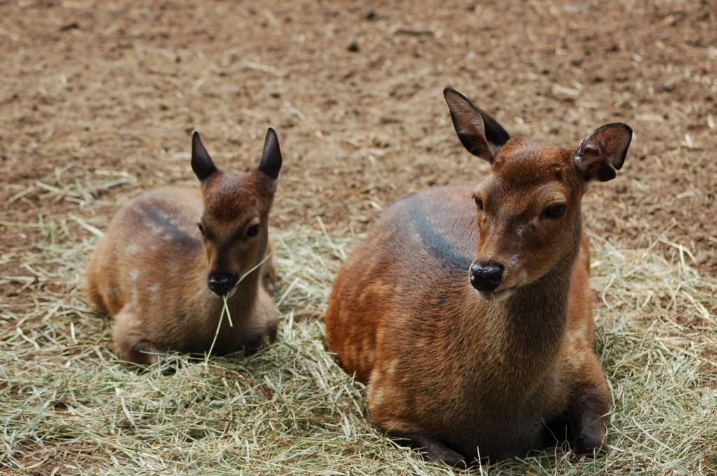 GarLyn Zoo Mom Baby Sitka Deer