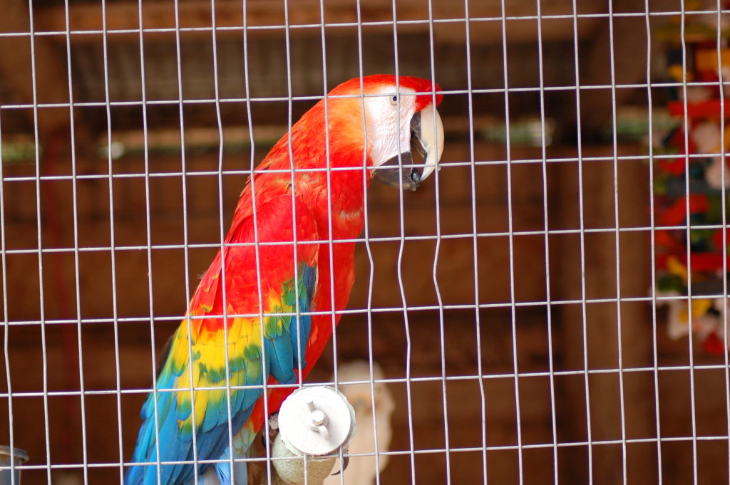 GarLyn Zoo Parrot