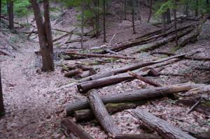 Trees North Ottawa Dunes Trail