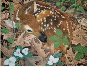 Fawn: $75 for Print, $3000 for original (oil on canvas)