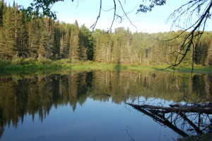 Van Riper State Park Trail Reflections