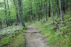 Wooded Path Piers Gorge Michigan DNR