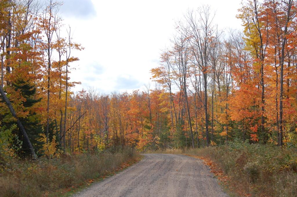 Dirt Road near White's Bridge, Ionia County