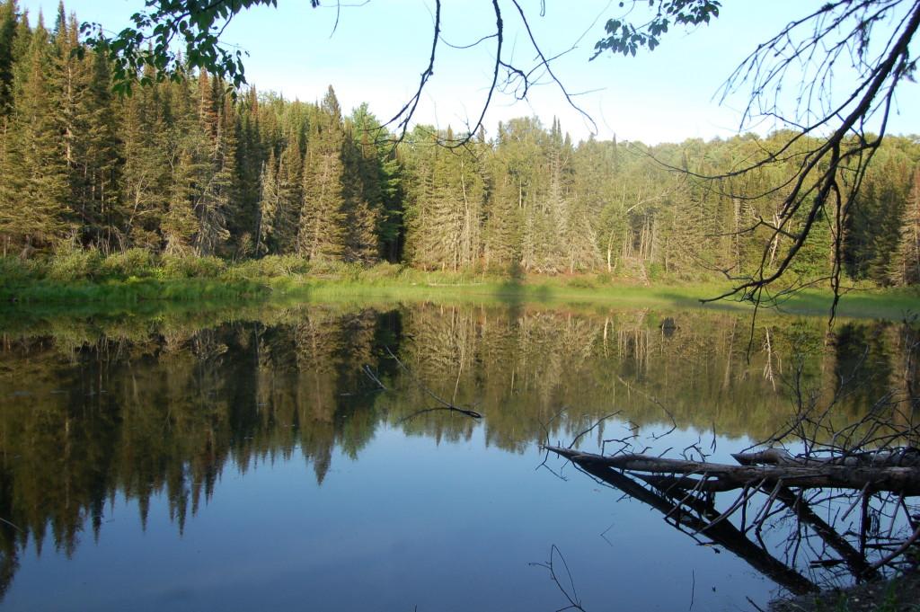 Van Riper State Park Reflections MI DNR