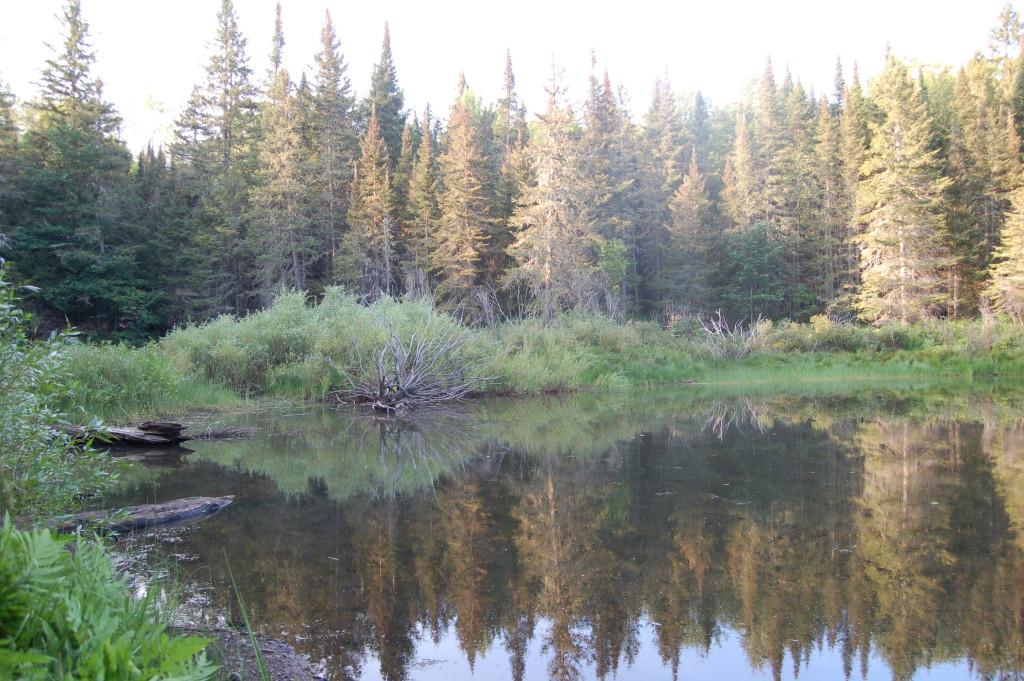 Van Riper State Park Trail Beaver Pond