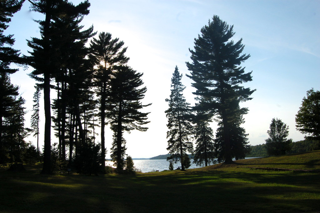 Van Riper State Park Trees Lawn Michigan