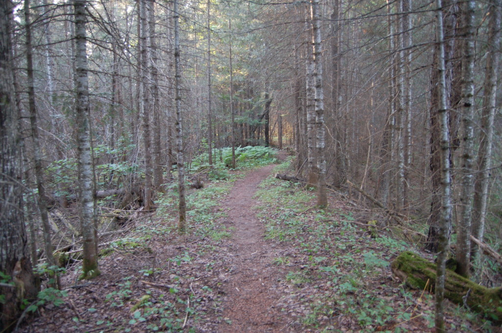 Van Riper State Park Wooded Hiking Trail