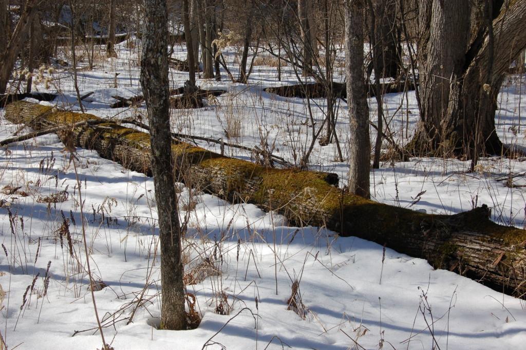 Deerfield Nature Park Fallen Tree
