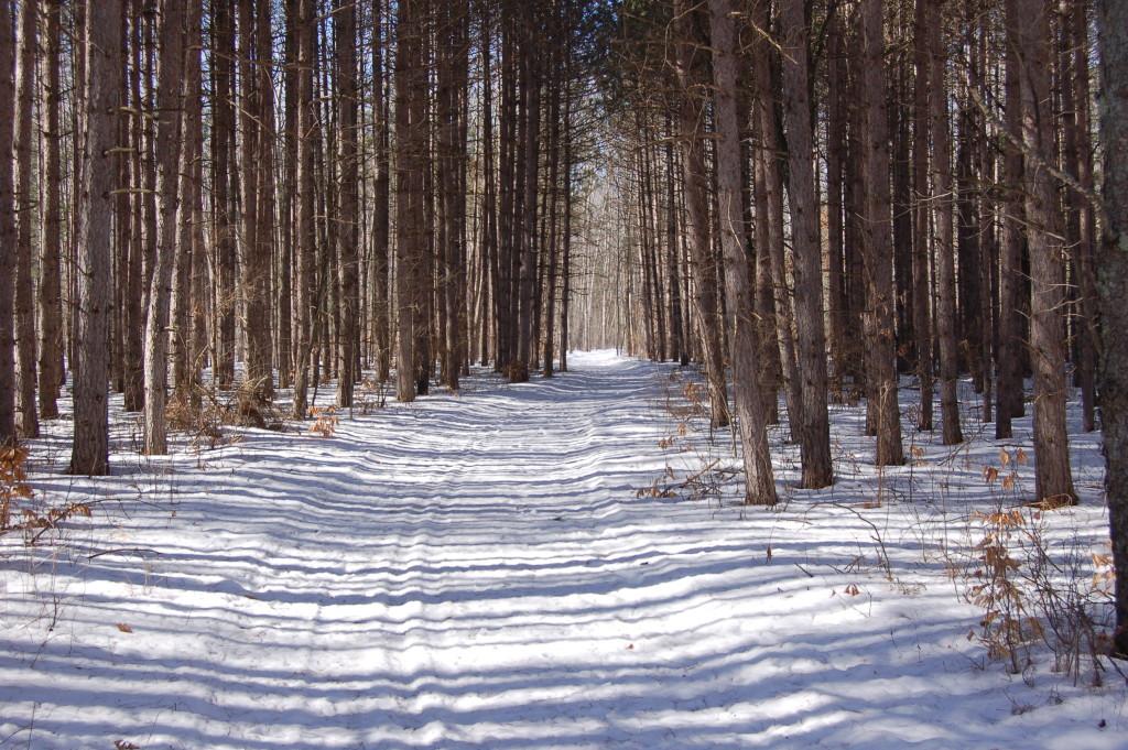 Deerfield Nature Park Winter Woods